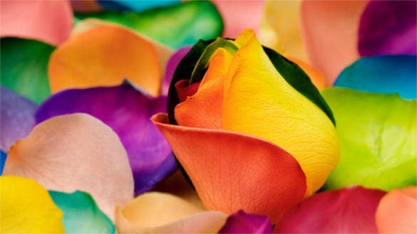 rainbow flower background for desktop download