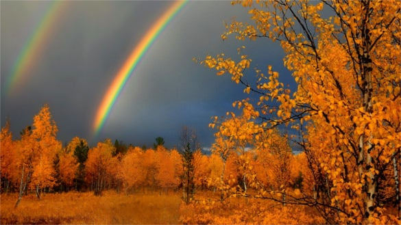 autumn rainbow background for cell phone download