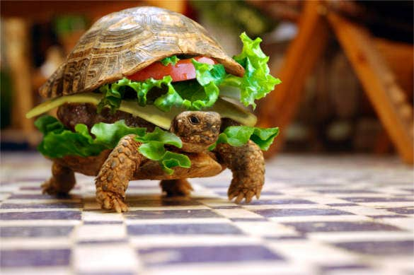 funny turtle sandwich background download