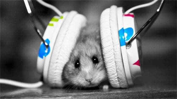 funny music fan music little hamster background download
