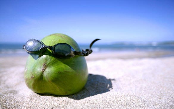 summer fun with coconut fruit funny wallpaper download