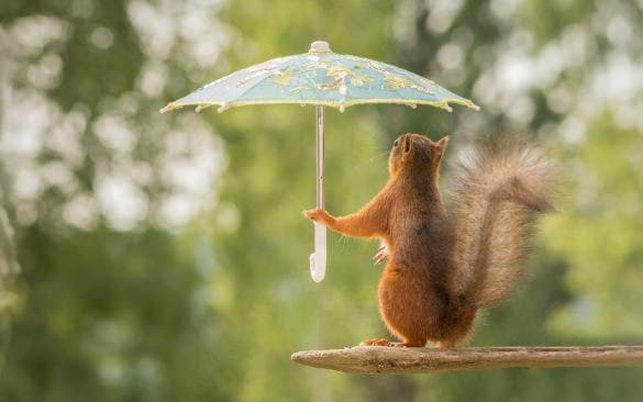 funny squirrel with umbrella funny wallpaper for free