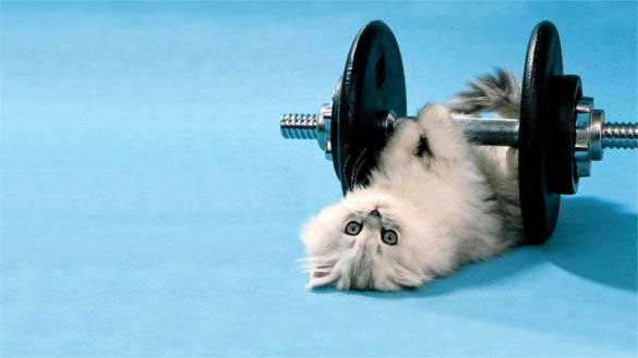 cat dumbbells funny lie background for desktop