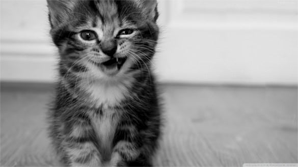 funny kitten wallpaper background free download