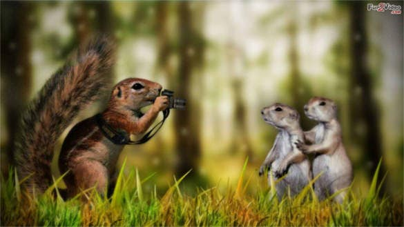 squirrel funny wallpaper background free download