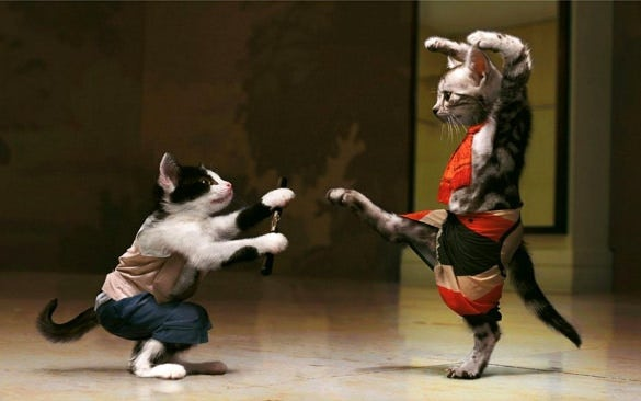 ninja cat fight funny wallpaper background download