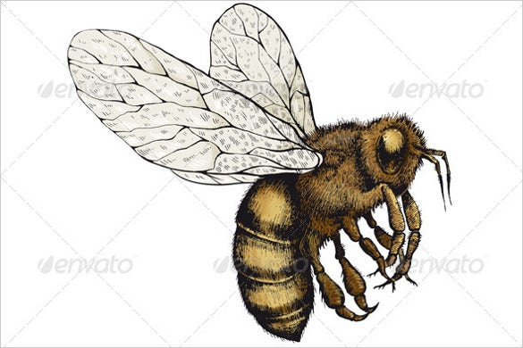 bee on a transparent background psd format download
