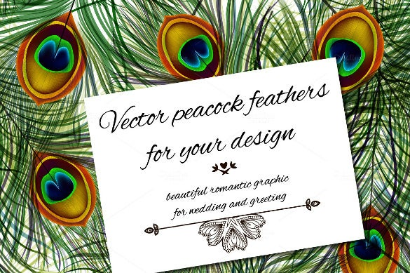 beautiful vector peacock feather
