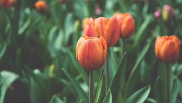 floralvector