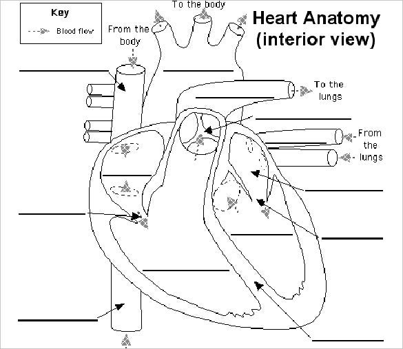 picture about Printable Heart Diagram referred to as Middle Diagram 15+ Absolutely free Printable Phrase, Excel, EPS, PSD