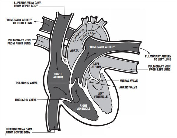graphic relating to Printable Heart Diagram identify Middle Diagram 15+ No cost Printable Phrase, Excel, EPS, PSD