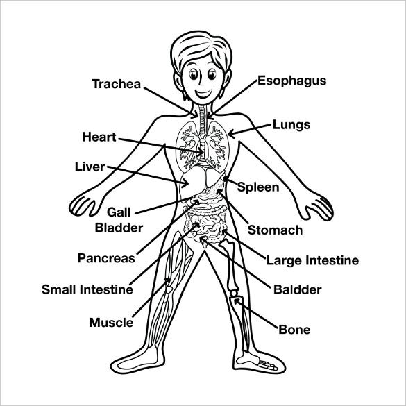 Human Body Free Template free body diagram 10 free printable download free & premium