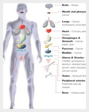 Internal Body Parts Template Download