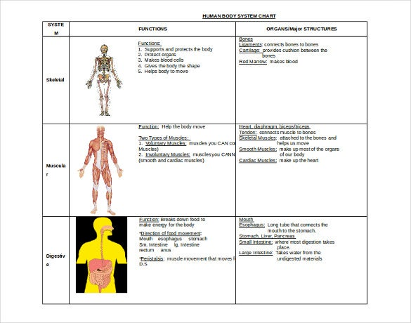 Body System Chart Grude Interpretomics Co