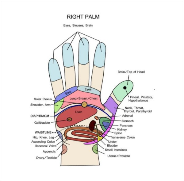 Hand Reflexology Chart Template PDF Document Download