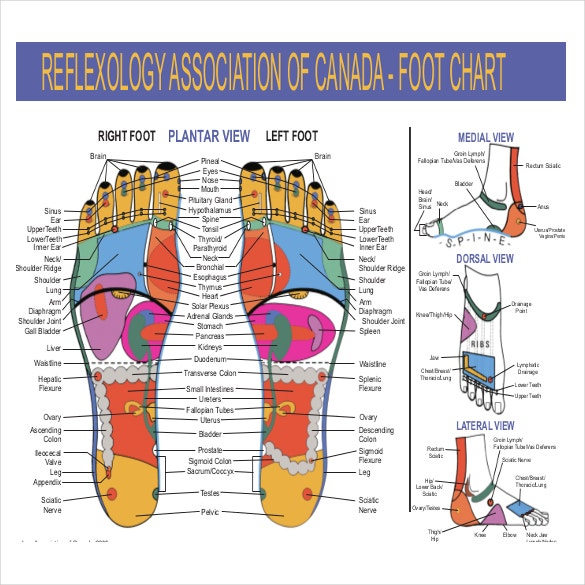 foot reflexology chart pdf  Reflexology Chart Templates – 9  Free PDF Documents Download ...