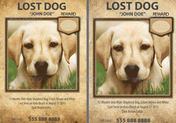 Lost pet poster templates free