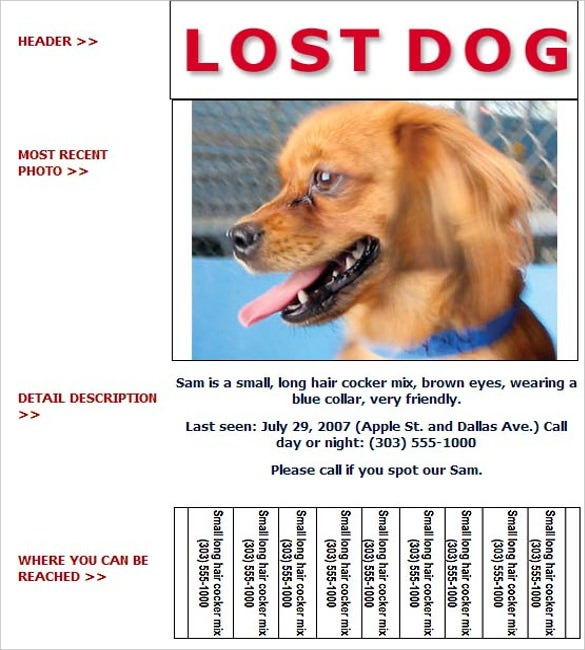 lost pet flyer template with detailed information