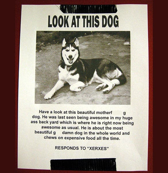 Lost Pet Poster Lost Dog Flyer Create Flyer Missing Dog Poster
