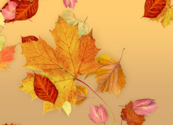 leaves theme fall background template