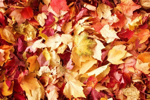 fall leaves fall background template