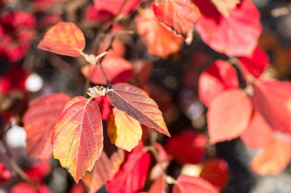 red leaves fall background template
