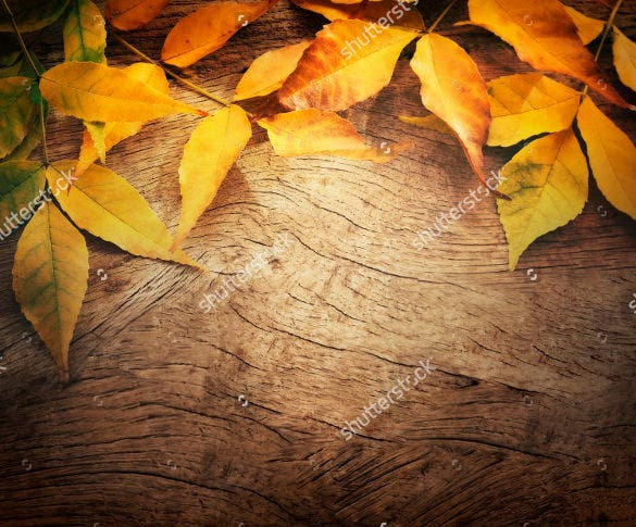 eligant fall leaves background template