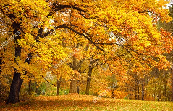 colorfull fall background template