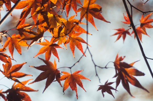 attractive fall background template
