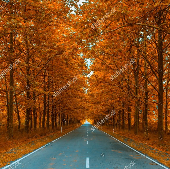 road view fall background template