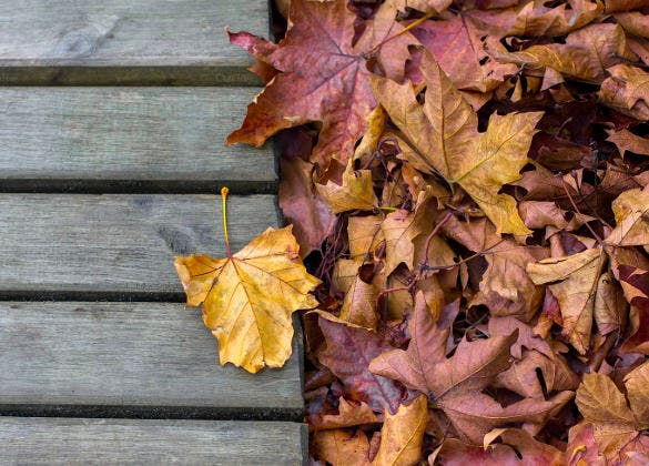 leaf and wood fall background template