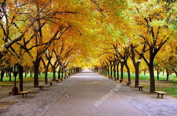 landscape fall background template