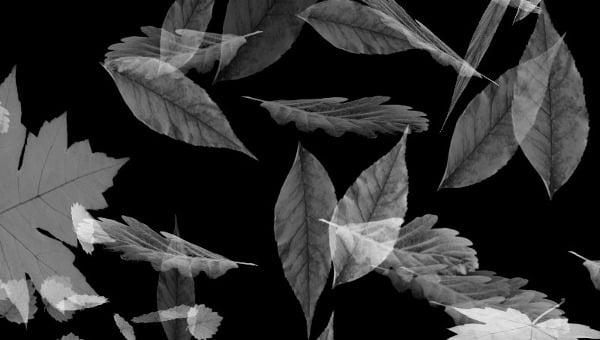 leafbrush