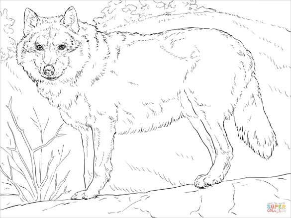 wolfs drawing with forest theme