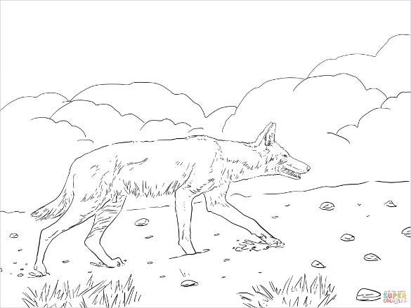 african ethiopian wolf drawing template