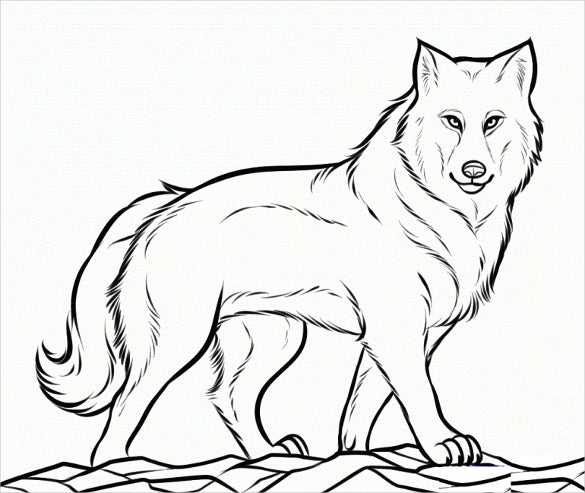 ready to color wolf drawing