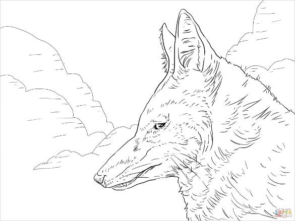 ethiopian wolf drawing template