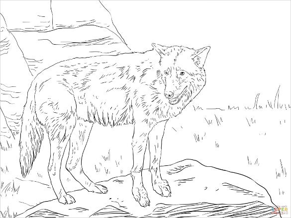 eastern wolf drawing template