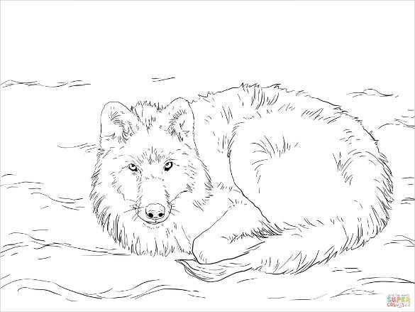 arctic wolf drawing template laying on snow