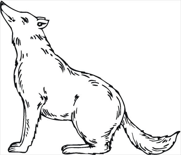 sitting wolf drawing template