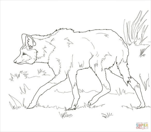 south american maned wolf drawing template