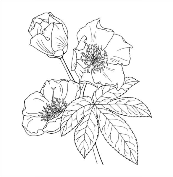 coloring pages of realistic flowers – Jawar | 600x585