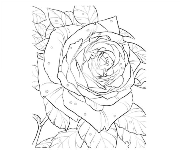 Rose Coloring Pages Pdf : Flower coloring pages free psd ai vector eps