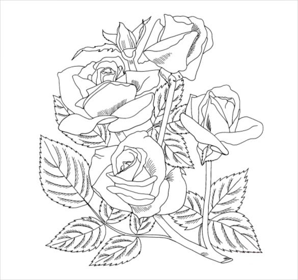 arizona grandiflora rose coloring page pdf free download
