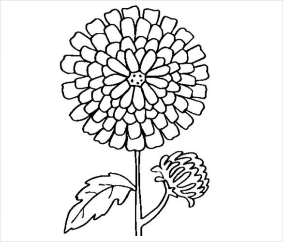 chrysanthemum flower coloring page pdf free download