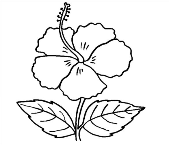 - 21+ Flower Coloring Pages -PSD, AI, Vector EPS Free & Premium Templates