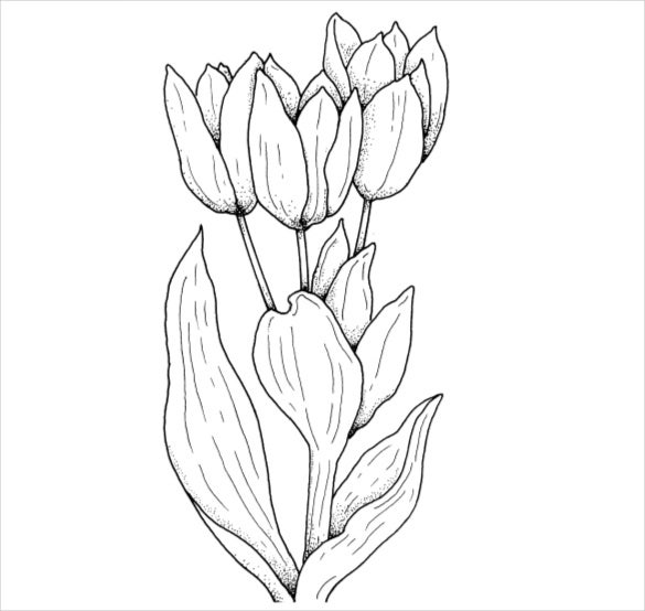 tulips flower coloring page pdf free download