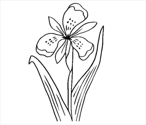iris flower coloring page pdf free download