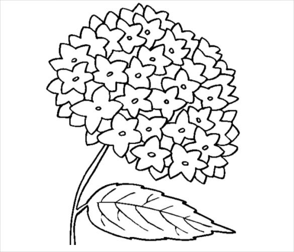 hydrangea flower coloring page pdf free download
