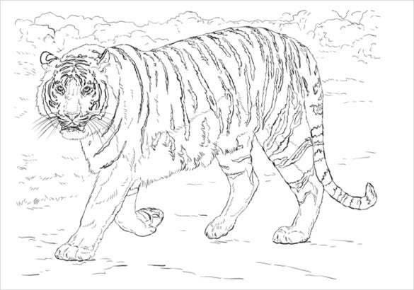 Animal Coloring Pages 25 Free Psd Ai Vector Eps Coloring Pages Free Pdf